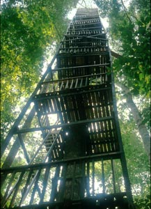 Tree platform for studying rain forest canopy